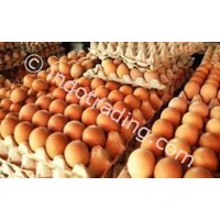 Jual Telur Ayam Ws