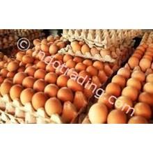 Telur Ayam Ws