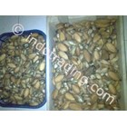 Kerang Mata Tujuh Kering 2 (Dry Abalone)