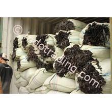 Rumput Laut Sargassum 2