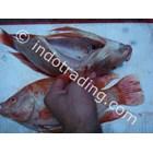 Ikan Nila Merah Beku Wgs