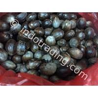 Whole Nutmeg Seeds