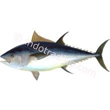 Ikan Tuna