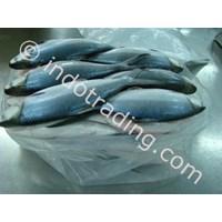 Ikan Bandeng 2