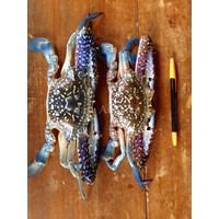 Rajungan / Swimmer Crabs