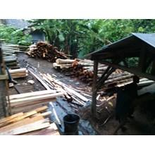 Bahan Kayu Pinus