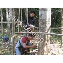 Jasa Injeksi Pohon Gaharu