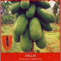 Sell Papaya seeds