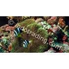 Komodo Liveaboard Dive 3 Days