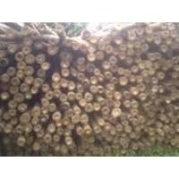 Jual Bambu Uk 8-9