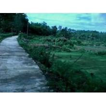 Tanah Seluas 100 Hektar Status Hak Milik Tanah Adat