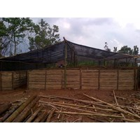 Sell IN THE SEARCH FOR SERIOUS INVESTORS TO COOPERATION OF PLANT NURSERY WOOD WOODEN SENGON JABON ETC.