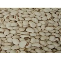 Jual Kacang Koro