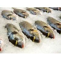 Jual Ikan Beku