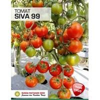 Jual Tomat Siva 99