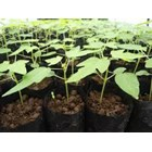 Sell Papaya Seed California