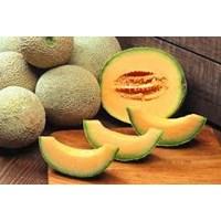 Jual Melon