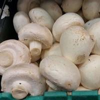 Jamur Mushroom Button