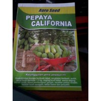 Sell Bibit Pepaya California Ipb9