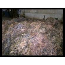 Rumput Laut Kering