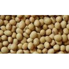 Kacang Kedelai Import