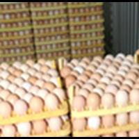 Jual Hasi Telur Malindo Feedmill