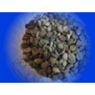 Jual Balinese Arabica Coffee Beans