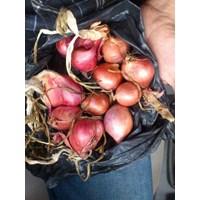 Jual Distributor Bawang Merah Aceh