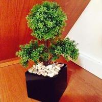 Jual Pohon Bonsai