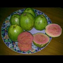 Guava Fruits-  PINK Guava  Jambu Biji Merah