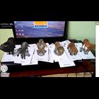 Jual Kartu Animasi Zebra Animal 4D Bandung