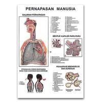 Jual Carta Sistem Alat Pernafasan Manusia
