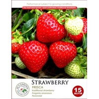 Jual Strawberry Fresca