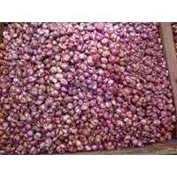 Jual Bawang Merah Jawa