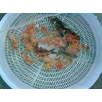 Grosir Ikan Hias