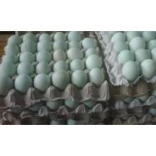 Telur Bebek Mentah