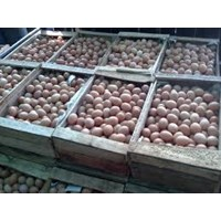Jual Telur Negeri