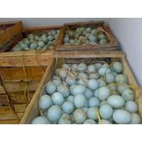 Jual  Telur Bebek Murah Surabaya