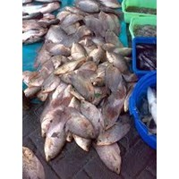 Jual ikan laut segar