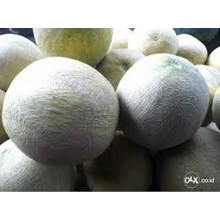 Melon Segar