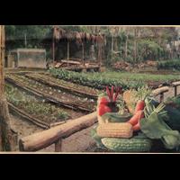 Distributor Sayur - Sayuran