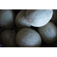 Jual MELON ROCK