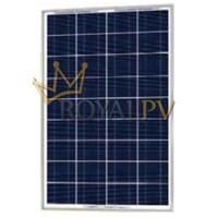 Solar Panel Of 100WP Royalpv Poly