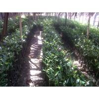 Mangrove And Evergreen Marine