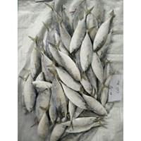 Jual Ikan Lema (Kembung)