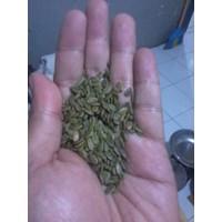 Benih Sengon Laut (Paraserianthes Falcataria)