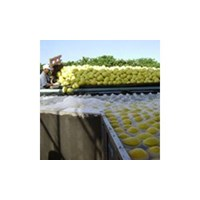 Fruit and Vegetable Processing Machinery