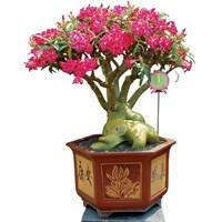 Pot Bunga dan Tanaman