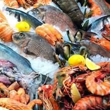 Ikan dan Hasil Laut