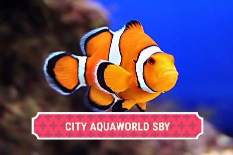 Toko City Aquaworld Surabaya